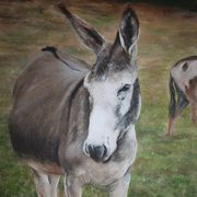Irish Art, Donkey 2,