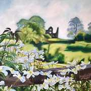 Clematis In Bloom (From the Mill house to the old ruins of Fennor Castle, Slane, Co. Meath)