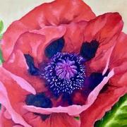 Summer Poppy