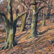 Massey's Woods 3
