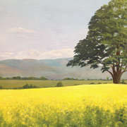 Oil Seed Rape and the Cooley Mountains