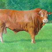 Tuites bull