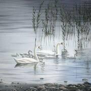 marriettes swans
