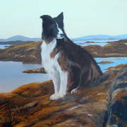 rossadilisk sheep dog
