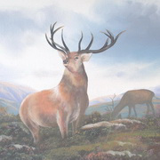 Stags In The West