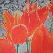 Orange tulips against the wall