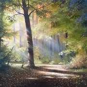 Forrest Glow
