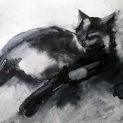Studio Cat