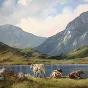 Cattle on Roundstone Bog,Connemara