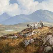 Connemara Ponies on Errislannan High Road,Clifden Connemara