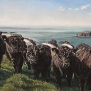The Belties