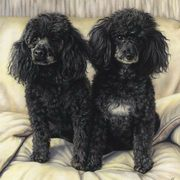 Art 'The Poodles'