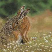 Hare n Meadow