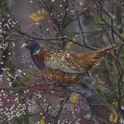 Midnight Pheasant