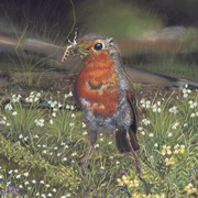 Robin With Wild Garlic and Primroses
