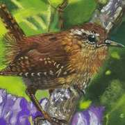 Wren With Irises