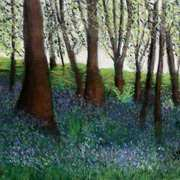 Ballycastle Bluebells