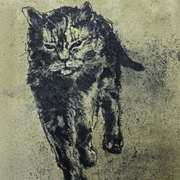 just cats 6