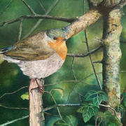 The Robin's Return