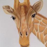 Coucou Monsieur Giraffe