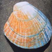 Shell #1