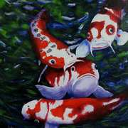 Red Koi - Not Coy