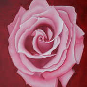 Pink Rose on Red