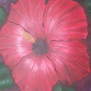 Shiny Hibiscus