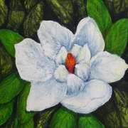 Magnolia, Beeswax