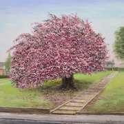 Cherry Blossom, Botanic Road  Dublin