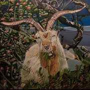 Wild Goat in Dunmore East