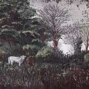 Cattle at Clonfadda