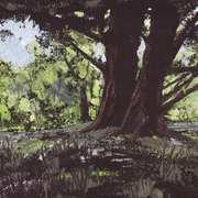 Forest Glade,Killarney