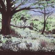 Forest Glade,Killarney 2