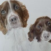 Spaniel Brothers