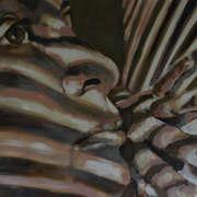 Sun Zebra