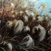 Bog Cotton in the Breeze