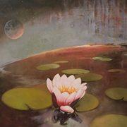 Crack of Light on a Lilly Pond