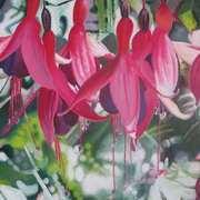 Blossom Fuchsias