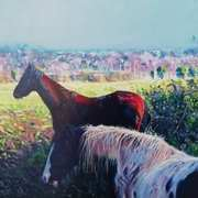 Horses Cooling