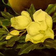 Magnolia on Blue Velvet