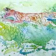 Fox,Hunting in rhe Sun