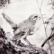 The Druids Bird (Wren)